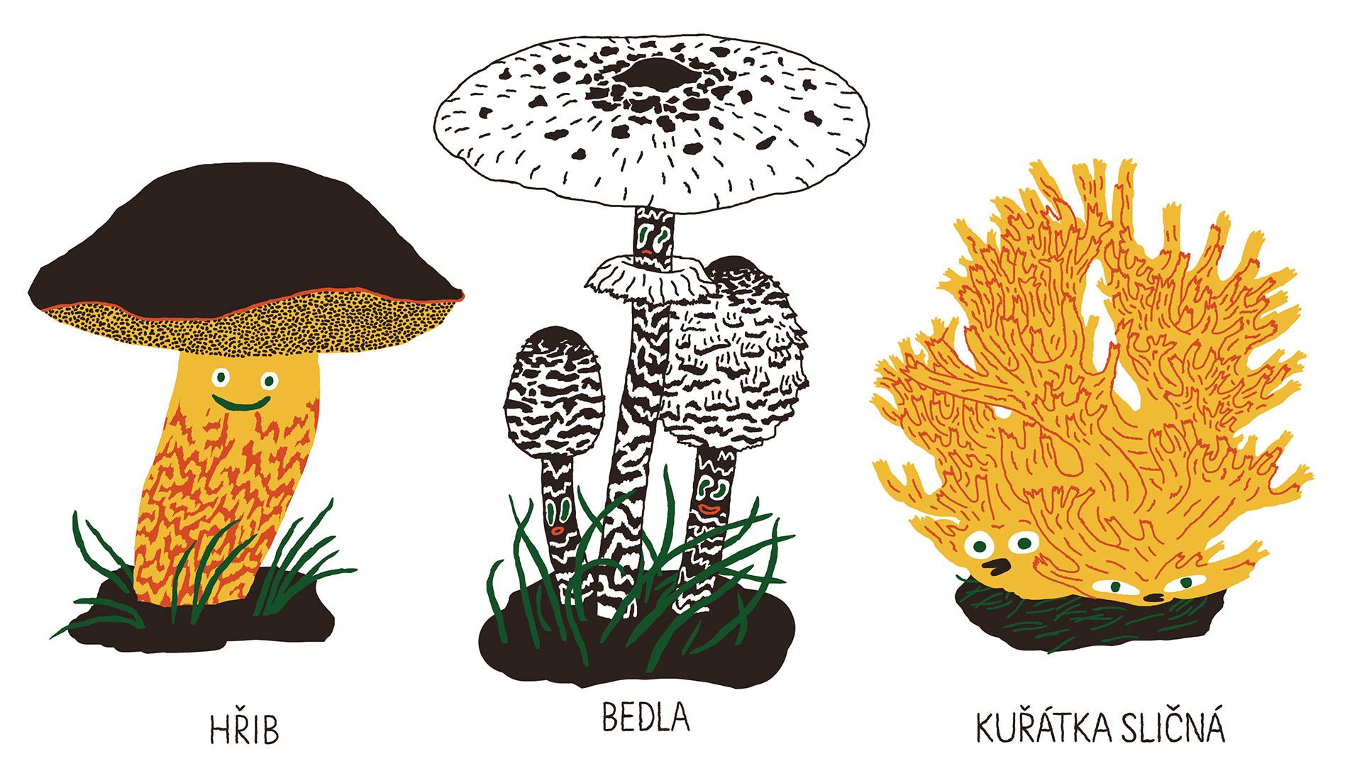 tri-uvodni-houby